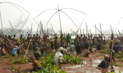 আতিলা বিলে দিনব্যাপী মাছ ধরার উৎসব