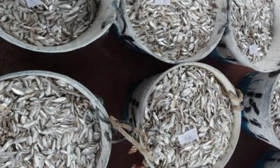 কাপ্তাই হ্রদে মাছ আহরণে ধাক্কা, প্রথম চার মাসে কমেছে ৮৮০ টন