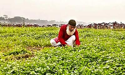 বিলপারের কৃষক, কিশোরী আর পানকৌড়ি