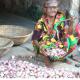 ভারতীয় পেঁয়াজের চাহিদা নেই হিলিতে