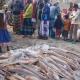সুন্দরবনে একবার জাল ফেলেই উঠল ছয় লাখ টাকার মাছ