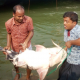 ৩৭ কেজির বাগাড় মাছটি বিক্রি হলো সাড়ে ৪২ হাজার টাকায়