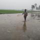 ঠাকুরগাঁওয়ে বোরো আবাদে ব্যস্ত সময় পার করছে কৃষক