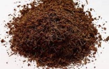 কোকো পিটের মাধ্যমে অভিনব পদ্ধতিতে সবজি চারা উৎপাদন