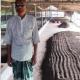 কেঁচো সার তৈরি করে সফল কৃষক তসলিম