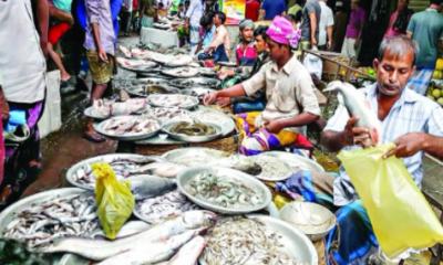 গবেষণায় তথ্য: করোনায় ১৫ শতাংশ কমেছে মাছের দাম