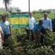 জয়পুরহাটে বিটি বেগুন চাষে সফল কৃষক দেলোয়ার হোসেন