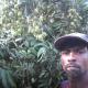 পাহাড়ী ঢালুতে লিচু চাষে সফল কাপ্তাইয়ের কৃষক এনামুল
