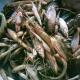 বানার নদে মরে ভেসে উঠছে দেশি মাছ