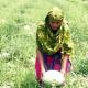ভোলায় করোনার মধ্যে তরমুজ বিক্রি করে লাভবান চাষিরা