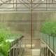 মাটি ছাড়া কেবল পানি ব্যবহার করে নতুন 'কৃষি উৎপাদন পদ্ধতি'