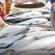 অর্থনৈতিক উন্নয়নের প্রতীক কুমিল্লার মৎস্য খাত