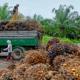 ইন্দোনেশিয়ায় উৎপাদন ও রফতানি বেড়েছে