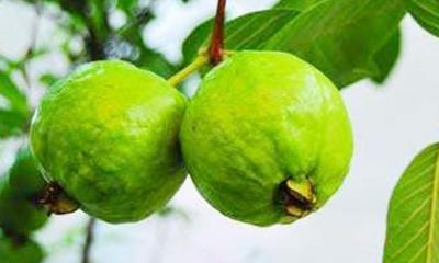 পেয়ারার পুষ্টিগুণ