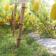 বিষমুক্ত সবজি চাষে তাক লাগানো সাফল্য
