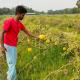 ময়মনসিংহে হলুদ তরমুজ চাষে সফল পাঁচ শিক্ষার্থী