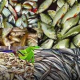 সরবরাহ বাড়ায় দেশি মাছের দাম কমেছে কুমিল্লায়