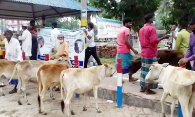 সহায়তা হিসেবে গরু পেলেন পটুয়াখালীর জেলেরা