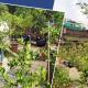 আইনজীবী শিপ্রা গোস্বামীর দৃষ্টিনন্দন ছাদ বাগান