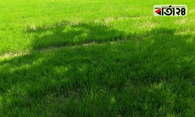 কমিউনিটি বীজতলায় কৃষকের মাঝে আশার সঞ্চার
