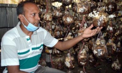 কুমিল্লায় জনপ্রিয় হচ্ছে 'সুপার ফুড' মাশরুম
