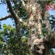 ফের লাউয়াছড়া সংলগ্ন বন থেকে ফলের গাছ কাটার পাঁয়তারা