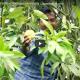 রংপুরের হাঁড়িভাঙা চাষে স্বাবলম্বী মানিকগঞ্জের একদল যুবক