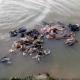 কোরবানির হাজার খানেক চামড়া নদীতে ফেলে দিয়েছেন ব্যবসায়ীরা