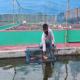 গাইবান্ধায় রঙিন মাছে স্বপ্নপূরণ, তরুণ উদ্যোক্তা আসাদুজ্জামানের