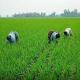 জয়পুরহাটে ৭০ হাজার হেক্টর জমিতে আমন চাষের লক্ষ্যমাত্রা নির্ধারণ
