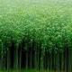দক্ষিণ-পশ্চিমাঞ্চলের ৬ জেলায় পাটের বাম্পার ফলনের সম্ভাবনা