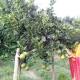 নওগাঁয় মাল্টা চাষে সফল নারী উদ্যোক্তা রিনা আক্তার