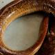 পদ্মায় ধরা পড়ল বিরল প্রজাতির বাউশ