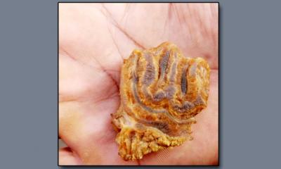 পাবনায় কোরবানি মাংসের টুকরার 'বিস্ময়কর আকৃতি' নিয়ে চাঞ্চল্য