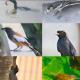 বাসা থেকে তুলেছি ৫০ প্রজাতির পাখির ছবি