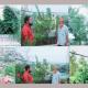 কুমিল্লার আব্দুর রবের ছাদবাগানটি যেন এক টুকরো সবুজ উদ্যান