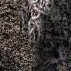 কেঁচো সারে ভাগ্যের চাকা ঘুরিয়েছে মর্জিনারা
