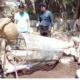 কেঁচো সার বাণিজ্যিক ভাবে উৎপাদনে দুই শতাধিক কৃষক