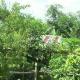 চুয়াডাঙ্গার বৃক্ষপ্রেমী আব্দুল কাদেরের সবুজ স্বপ্নের নেশা