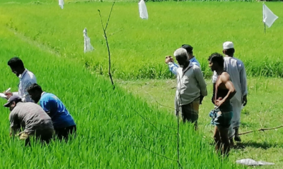চৌদ্দগ্রামে পোকা শনাক্তে অতন্ত্র জরিপ