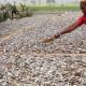 নাটোর থেকে ভারতে ৫০ কোটি টাকার শুটকি রপ্তানির সম্ভাবনা