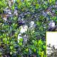 বালুবাড়ীতে বক পানকৌড়ির বসতি