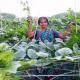 মাচা পদ্ধতিতে পুঁইশাক চাষে নির্মলা সুন্দরী এখন মডেল