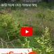 রাতের আঁধারে কাটা হলো দেড় হাজার গাছ