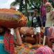 একদিনেই ভারত থেকে এলো ৯৬ টন কাঁচা মরিচ
