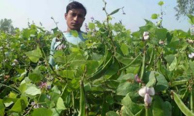 কুমিল্লার কৃষকরা শীতের আগাম সবজি ভালো দাম পাচ্ছেন