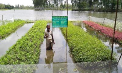 কুমিল্লায় জনপ্রিয় হচ্ছে ভাসমান সবজি চাষ