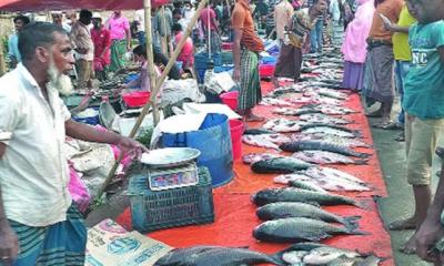 কুমিল্লায় পদুয়ার মাছের হাটে ক্রেতা-বিক্রেতার সমাগম
