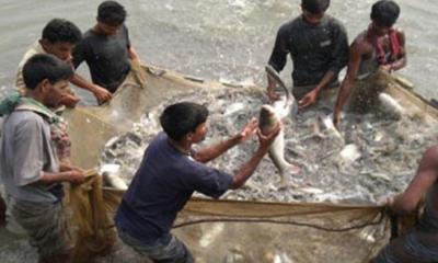 কুমিল্লায় প্লাবন ভূমিতে চাহিদার চেয়েও বেশি মাছ উৎপাদন