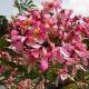 কুমিল্লায় সড়কের পাশের ময়লার ভাগাড় এখন দৃষ্টিনন্দন ফুলের বাগান